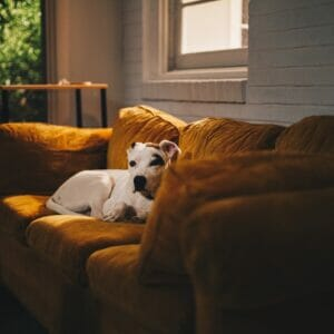 5 Ways to Keep Your House Clean with A Dog