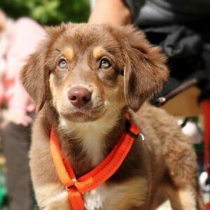 The Ultimate Puppy Checklist