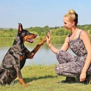 5 Tips for Taking Care of Your Dog's Paw