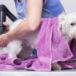 Pet grooming in UAE