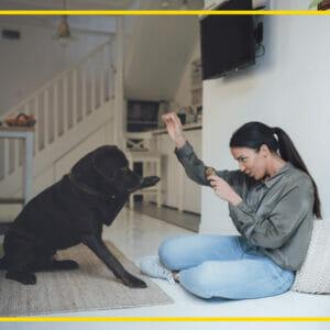 Pet Trainers in UAE