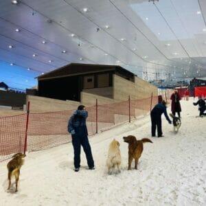 Dog in Ski Dubai